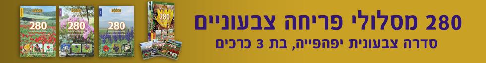 banner-49