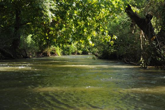 נחל חרמון תחתון.... הליכה בתוך המים בנחל חרמון תחתון